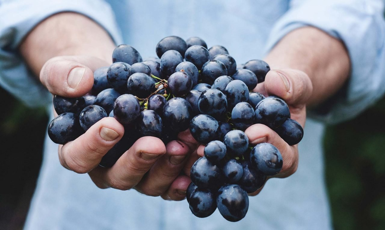 hand-person-plant-grape-fruit-berry-3752-pxhere.com