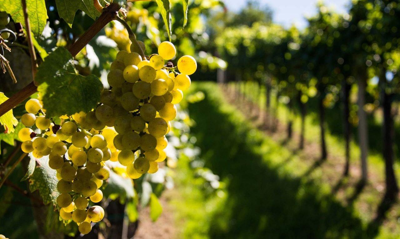 tree-nature-branch-blossom-plant-grape-1226805-pxhere.com